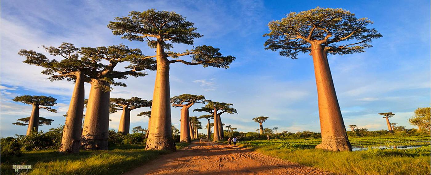 Cinque aspetti incredibili che probabilmente non conoscevi del Madagascar